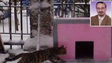 Sokağa kedi evi yaptığı için öldürüldü
