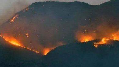 dersim orman yangın